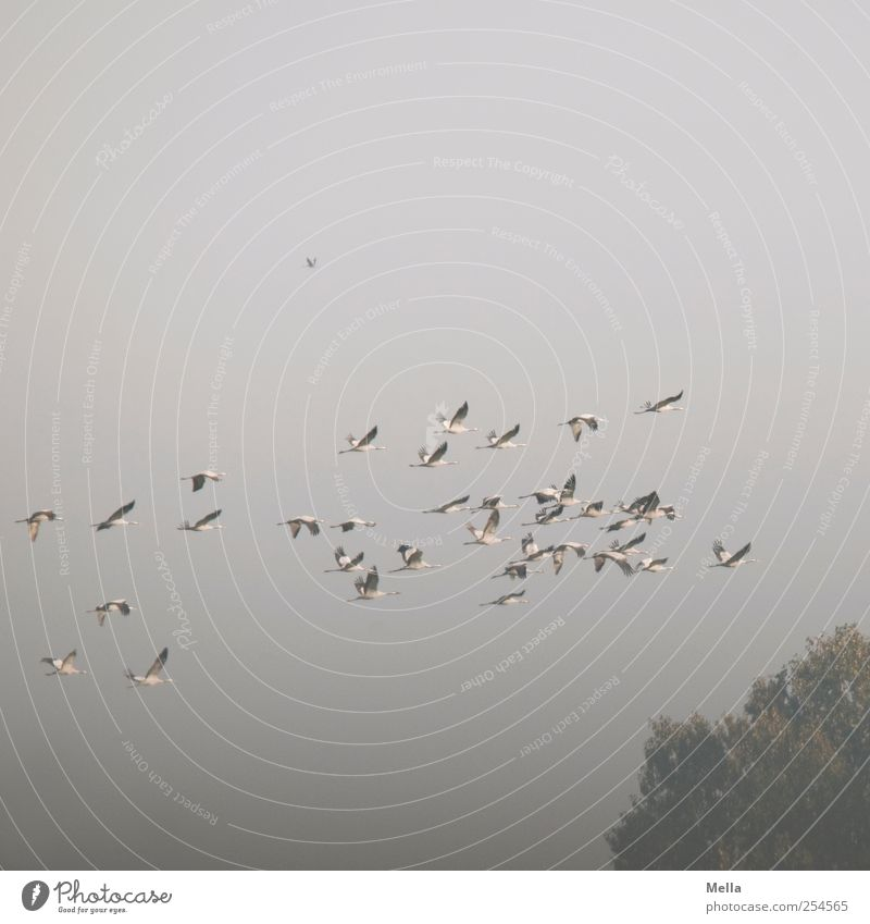 Nature Tree Animal Environment Freedom Gray Air Bird Together Flying Natural Treetop Flock Crane Accumulate
