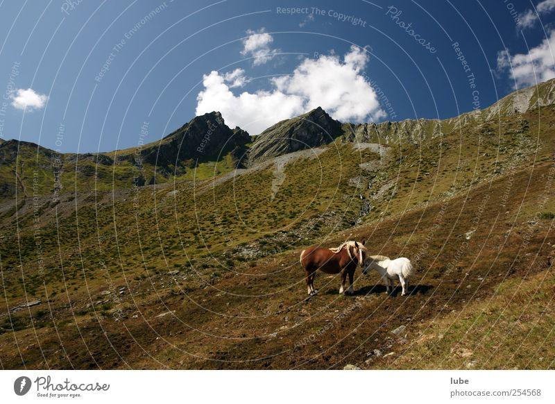 Nature Summer Animal Far-off places Environment Freedom Landscape Mountain Rock Hiking Adventure Tourism Climate Horse Hill Alps