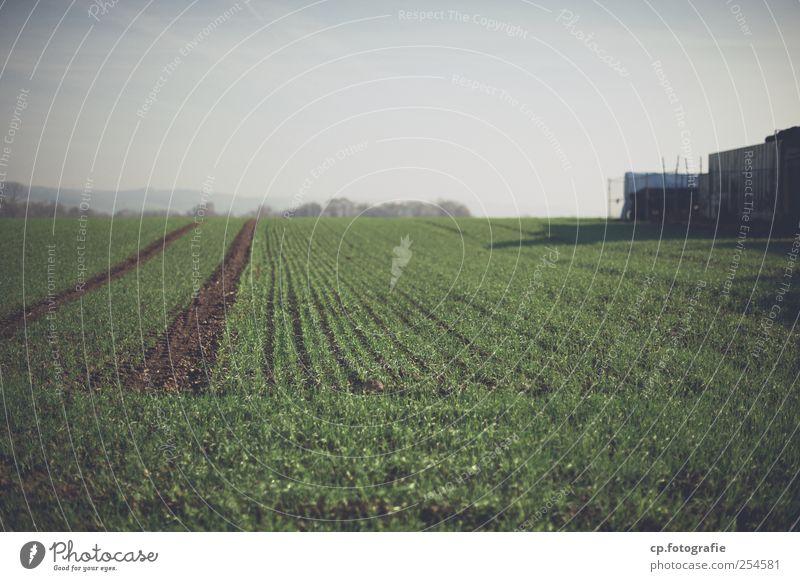 Plant Landscape Autumn Field Modern Agricultural crop