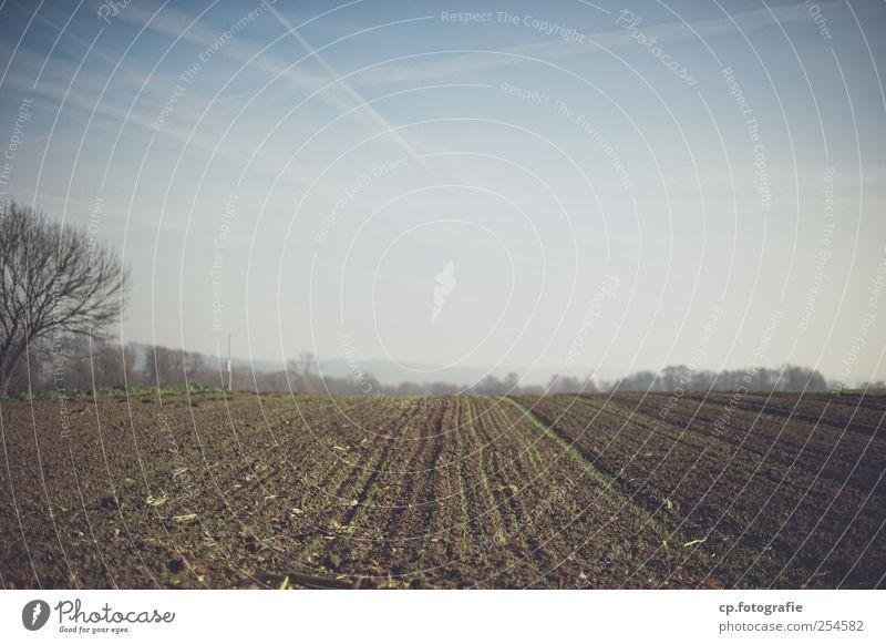 Landscape Autumn Field Modern Vapor trail Agricultural crop
