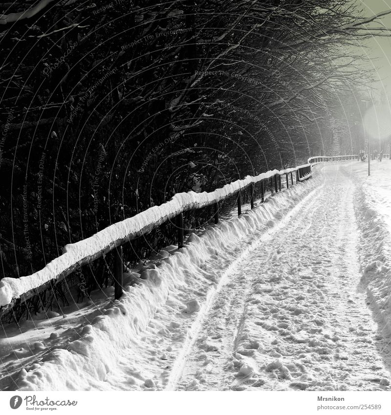 in the distance Nature Landscape Winter Ice Frost Snow Tree Park Field Forest Lanes & trails Dark Gray Black Bizarre Cold Black & white photo Subdued colour