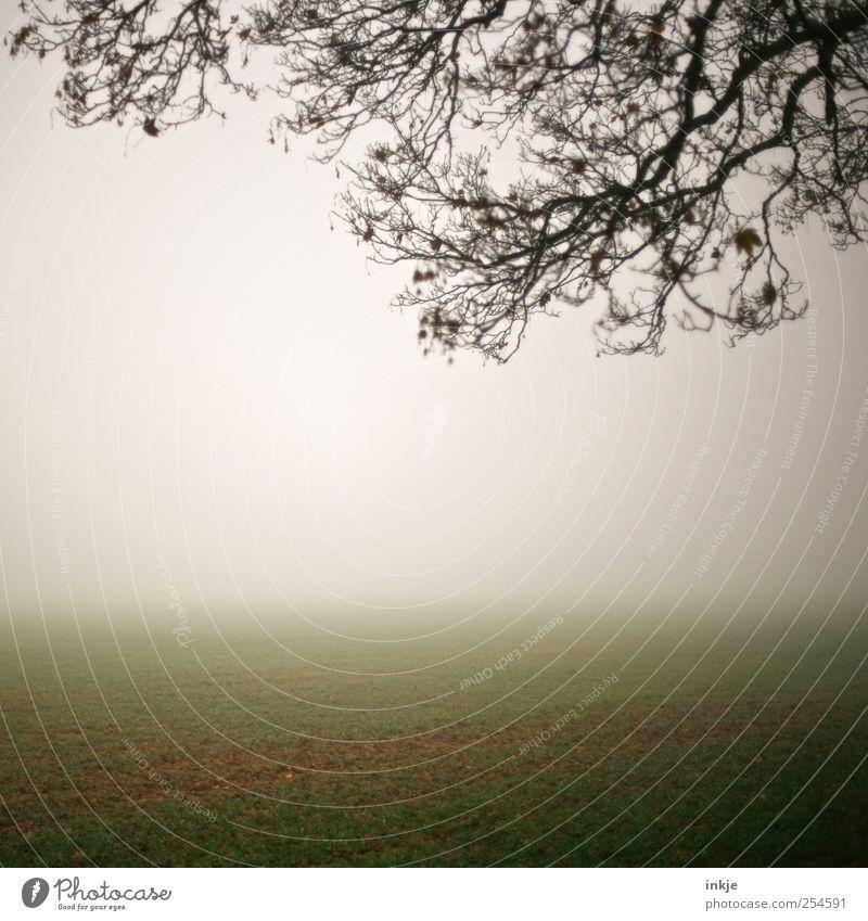 Sky Nature White Green Tree Calm Far-off places Dark Cold Autumn Landscape Grass Moody Bright Brown Field