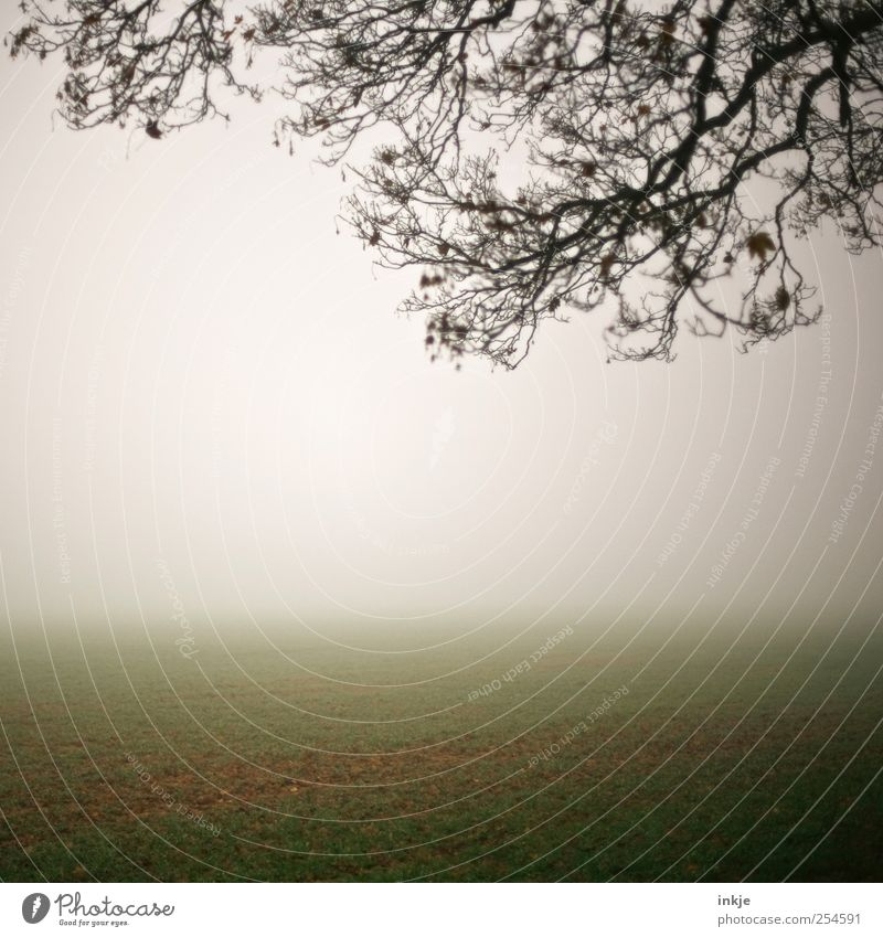 spooky Q Nature Landscape Sky Horizon Autumn Climate Fog Tree Grass Branch Field Dark Bright Cold Natural Gloomy Brown Green White Moody Idyll Far-off places