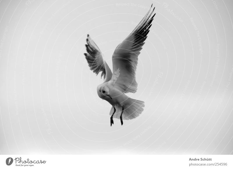 Sky Nature White Clouds Black Animal Gray Movement Bird Flying Gloomy Seagull