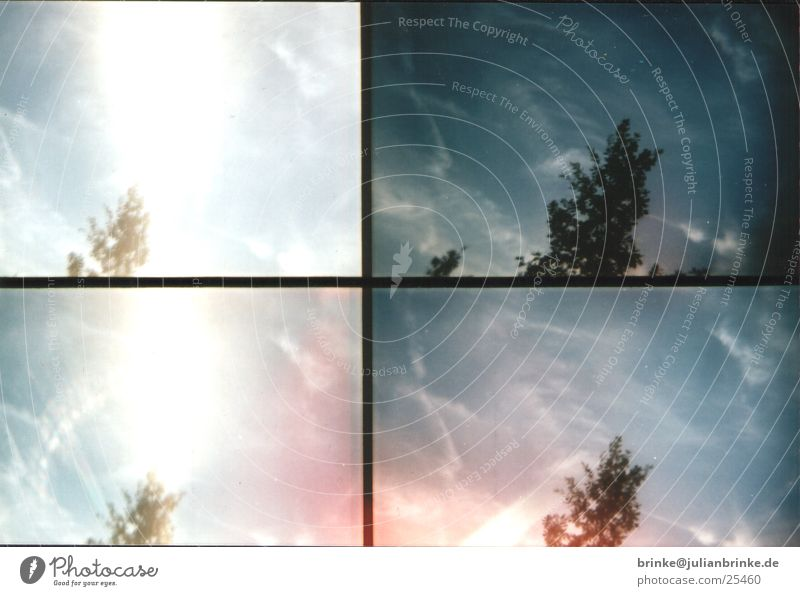 Scotty - Energy Tree Clouds Action Krefeld Sun Sky Lomography sampler Wind Blue Julian brink Guinea pig