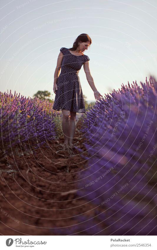 #A# Purple-Blue Art Esthetic Provence France Violet Lavender Lavender field Lavande harvest Green pastures Blossoming Idyll Peaceful Wanderlust Walking