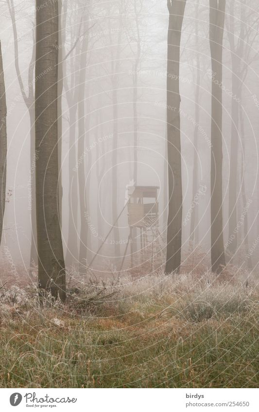 Nature Tree Loneliness Forest Autumn Cold Grass Fog Exceptional Change Peace Bizarre Unclear Hoar frost Woodground Hunting Blind