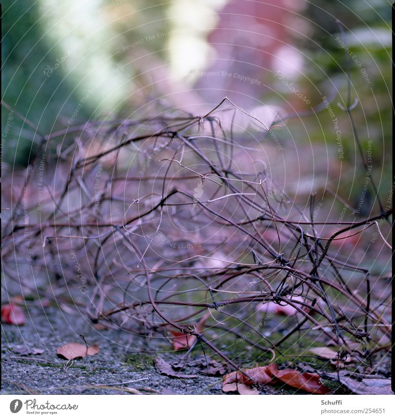 Nature Beautiful Plant Autumn Esthetic Bushes Faded To dry up
