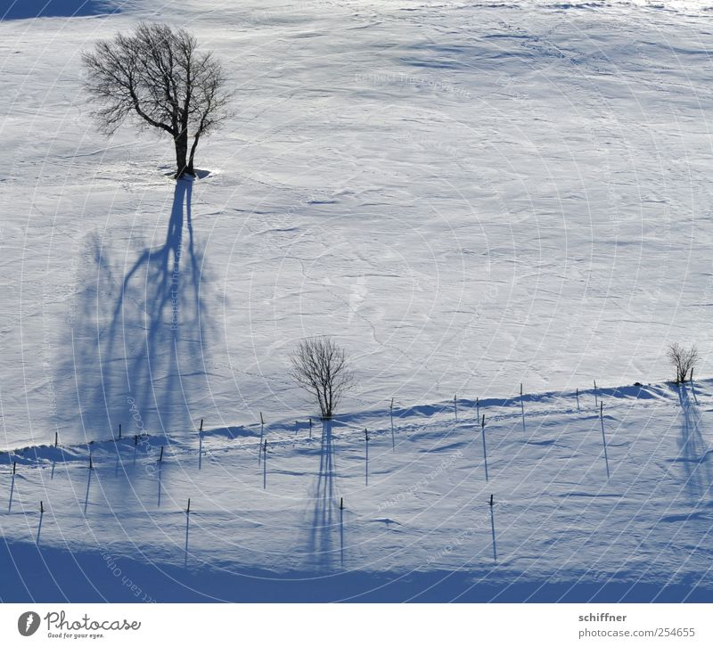 FRdrumrum | Shadow casting Landscape Winter Ice Frost Snow Plant Tree Cold White Slope Pasture Shadow play Fence Sunlight Exterior shot Deserted