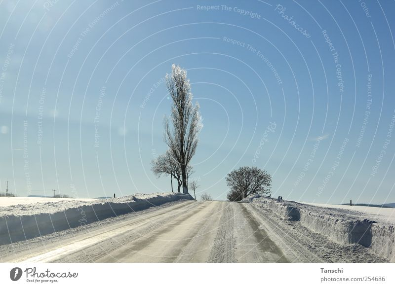 contrasts Landscape Sunlight Winter Beautiful weather Ice Frost Snow Tree Field Deserted Street Driving Cold Serene Horizon Colour photo Exterior shot Day