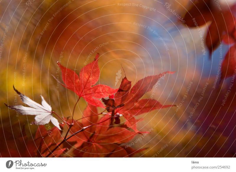 Nature Plant Leaf Autumn Landscape Garden Change Bushes Illuminate Beautiful weather Foliage plant