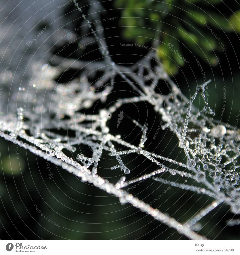 ice-cream pearls... Environment Nature Animal Drops of water Autumn Winter Ice Frost Spider's web Network Pearl necklace Glittering Hang Esthetic Authentic