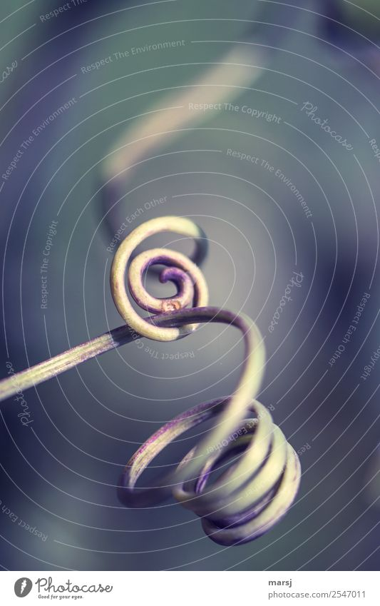 point of friction Nature Plant Part of the plant Tendril Spiral Exceptional Dark Thin Authentic Simple Elegant Together Cold Natural Wild Power Sadness