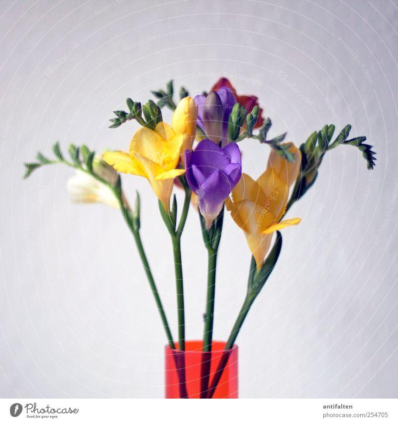 frescoes Plant Spring Summer Flower Leaf Blossom Bouquet Vase Flower vase Glass Esthetic Multicoloured Yellow Violet Moody Joie de vivre (Vitality) Spring fever