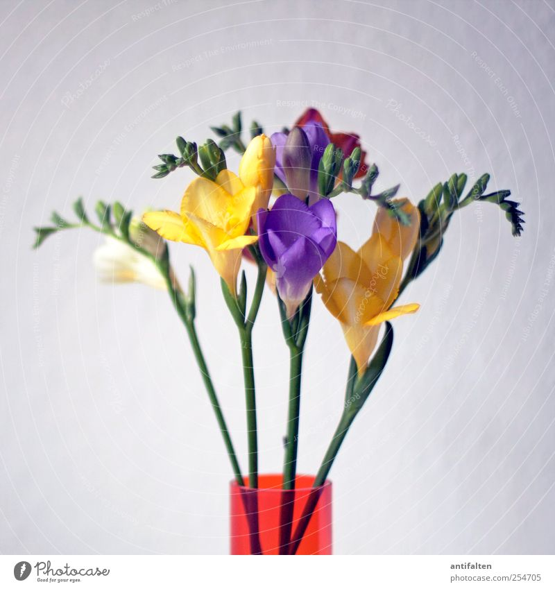 Green Plant Flower Summer Leaf Colour Yellow Blossom Spring Moody Glass Esthetic Violet Stalk Bouquet Joie de vivre (Vitality)