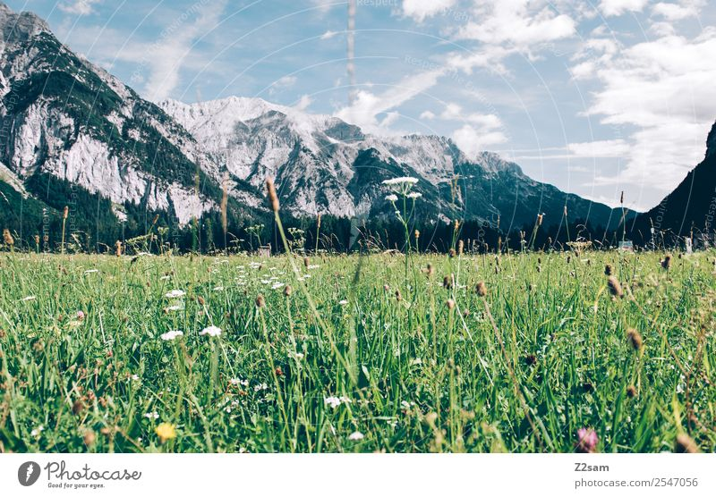 Karwendel Mountain Environment Nature Landscape Sky Clouds Summer Beautiful weather Blossom Meadow Alps Esthetic Fresh Natural Green Loneliness Relaxation Idyll