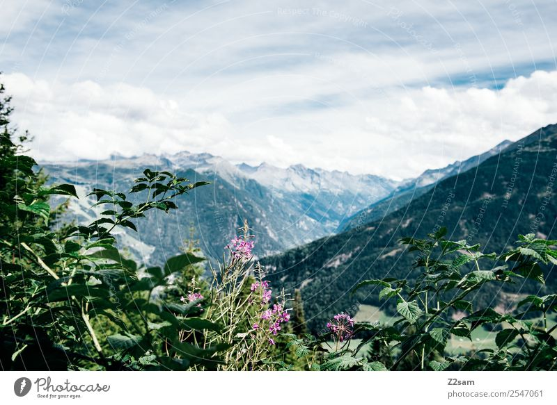 Sky Nature Vacation & Travel Summer Blue Green Landscape Flower Clouds Mountain Healthy Environment Natural Leisure and hobbies Hiking Fresh