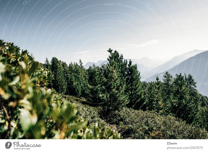 Pitztal Mountain Hiking Environment Nature Landscape Sky Summer Bushes Forest Alps Peak Esthetic Simple Sustainability Natural Blue Green Calm Loneliness