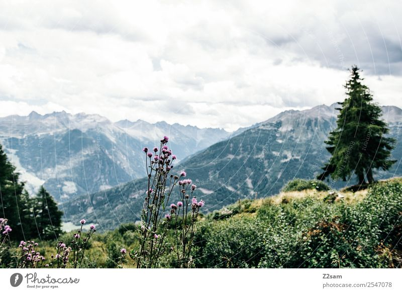 View into the Pitztal valley Vacation & Travel Tourism Hiking Environment Nature Landscape Sky Clouds Summer Beautiful weather Plant Flower Bushes Alps Mountain