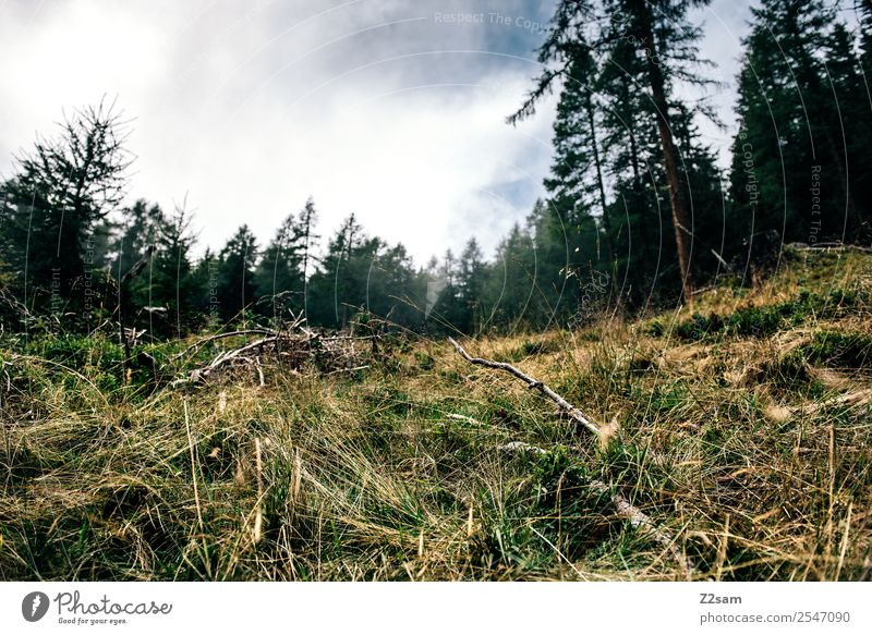 mushroom season Mountain Hiking Environment Nature Landscape Summer Bad weather Bushes Meadow Forest Alps Sustainability Natural Relaxation Idyll Perspective