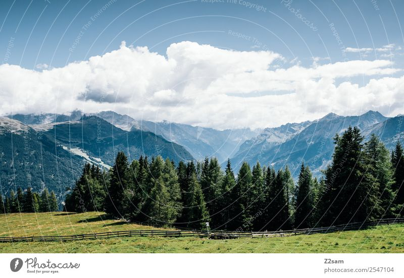 Direction Pitztal Vacation & Travel Mountain Nature Landscape Sky Summer Beautiful weather Meadow Forest Alps Esthetic Sustainability Natural Blue Green Calm