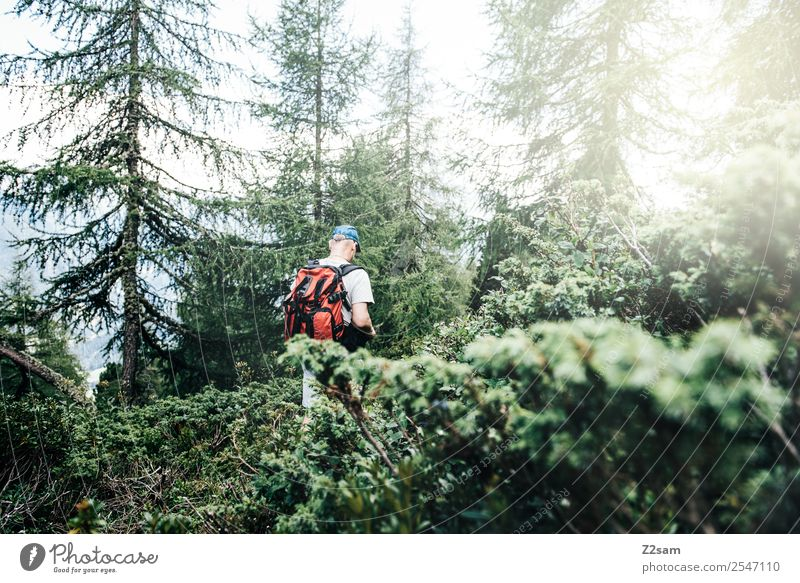 Hiking in the Pitztal valley Mountain Man Adults 45 - 60 years Nature Landscape Sun Sunlight Summer Bushes Forest Alps Relaxation Going Sports Fresh Healthy