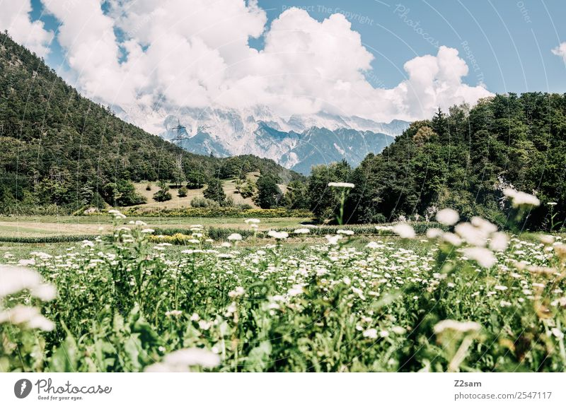 Inn Valley Vacation & Travel Trip Hiking Environment Nature Landscape Summer Beautiful weather Plant Flower Grass Alps Mountain Esthetic Fresh Sustainability
