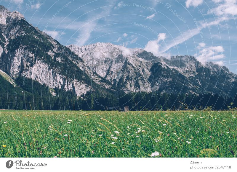 Karwendel Mountain Hiking Environment Nature Landscape Sky Clouds Summer Beautiful weather Grass Leaf Flower Meadow Alps Gigantic Natural Loneliness