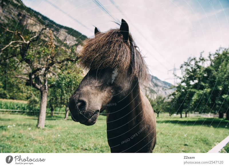 Inntales horse Nature Landscape Summer Beautiful weather Tree Grass Horse Looking Stand Esthetic Elegant Natural Cool (slang) Calm Idyll Sustainability