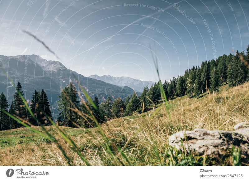 Mountain panorama in the Pitztal valley Vacation & Travel Hiking Environment Nature Landscape Summer Beautiful weather Field Alps Sustainability Natural Blue