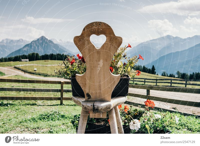 Love the Alps Mountain Hiking Environment Nature Landscape Summer Beautiful weather Flower Meadow Chair Wooden chair Friendliness Natural Multicoloured Green
