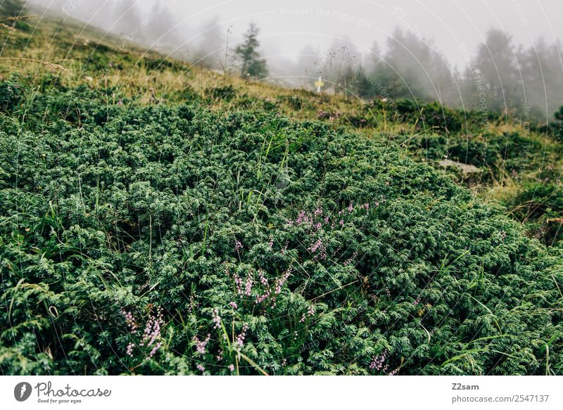 Alps   Plants   Fog Mountain Hiking Nature Landscape Animal Autumn Bad weather Bushes Forest Dark Sustainability Natural Green Calm Loneliness Idyll Environment