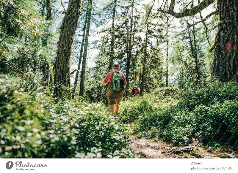 Hike in the Pitztal valley Lifestyle Vacation & Travel Tourism Trip Adventure Summer vacation Hiking Nature Landscape Sunlight Beautiful weather Bushes Forest