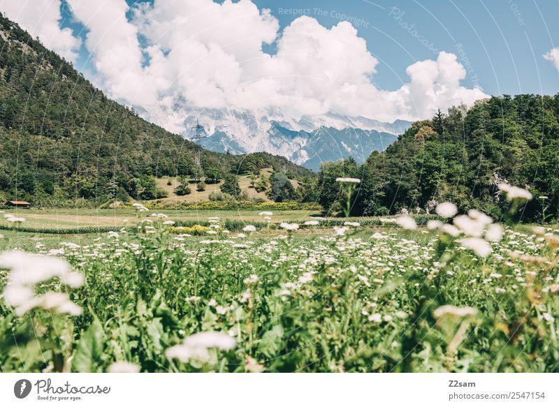 Nature Vacation & Travel Summer Blue Colour Green Landscape Flower Clouds Mountain Environment Natural Meadow Trip Hiking Idyll