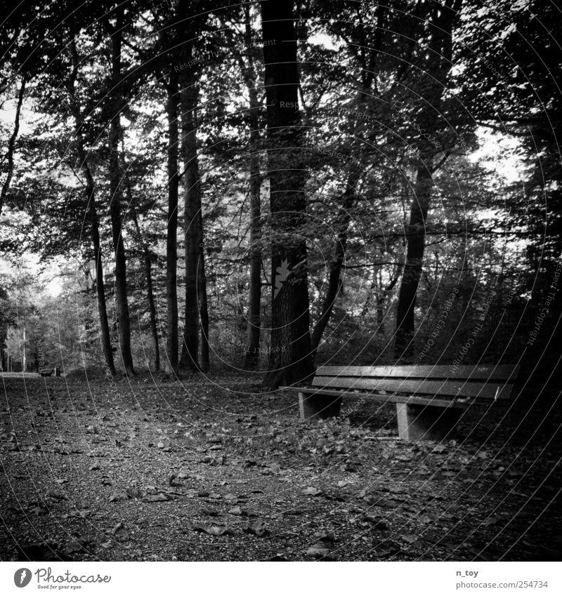 Nature White Tree Calm Black Forest Autumn Landscape Lanes & trails Moody Park Sit Break Peace Resting point