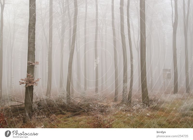misty world Nature Plant Autumn Fog Forest Exceptional Calm Loneliness Idyll Change Beech wood Hunting Blind Bleak Weather Many Tree trunk Hoar frost Frozen