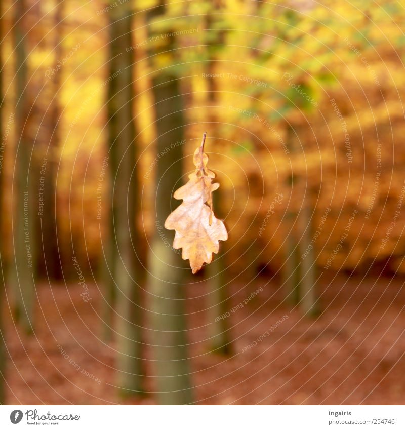 Nature Old Green Tree Plant Leaf Forest Yellow Autumn Environment Landscape Movement Moody Brown Flying Climate