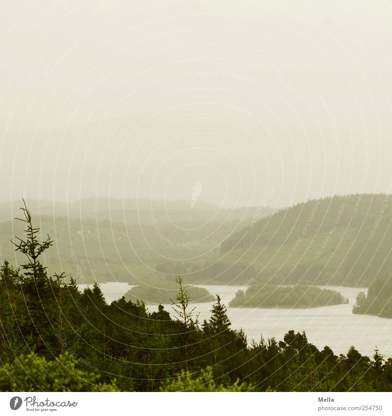 The horizon is straight. Environment Nature Landscape Bad weather Fog Tree Fir tree Hill Lake Far-off places Natural Gloomy Gray Green Scotland Island Forest