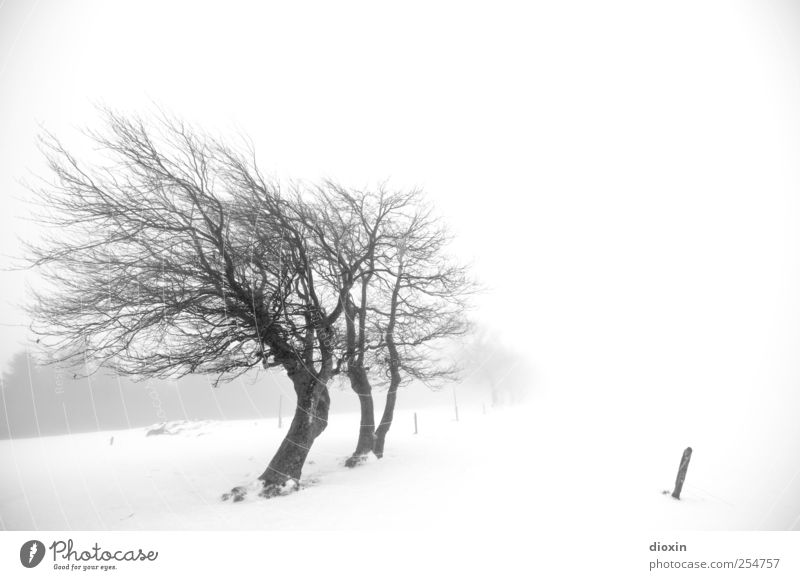 Nature White Tree Plant Winter Black Cold Snow Environment Landscape Weather Ice Fog Natural Climate Frost