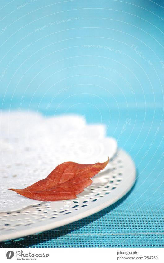 Nature Old Blue Red Leaf Calm Colour Autumn Cold Moody Time Wait Lie Esthetic Decoration Transience