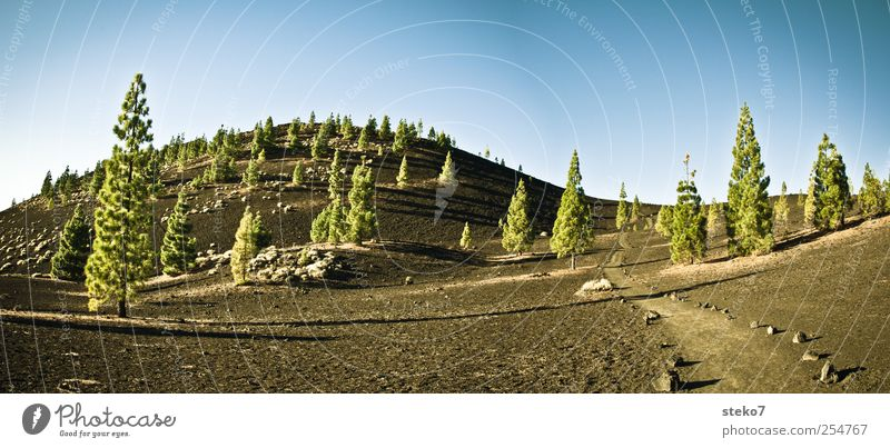 black forest Nature Cloudless sky Hill Rock Volcano Lanes & trails Blue Green Black Surrealism Tenerife Stone pine Gravel Colour photo Exterior shot Deserted