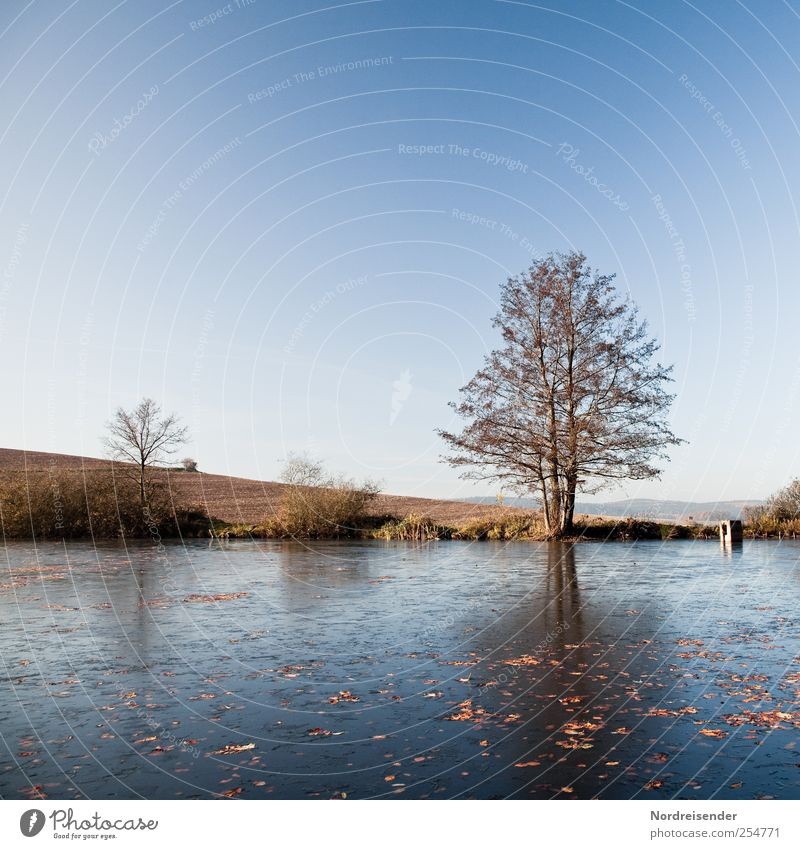 First ice... Senses Relaxation Calm Trip Nature Landscape Sky Cloudless sky Autumn Climate Beautiful weather Ice Frost Tree Pond Stagnating Moody Transience
