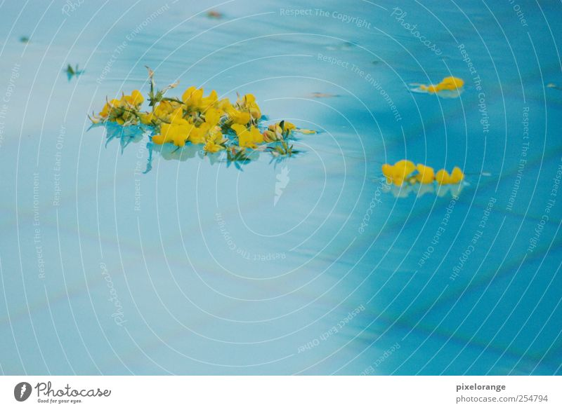 Pool I Harmonious Calm Spa Summer Swimming pool Nature Plant Water Blossom Broom blossom Blossoming Relaxation Esthetic Wet Blue Yellow Colour photo
