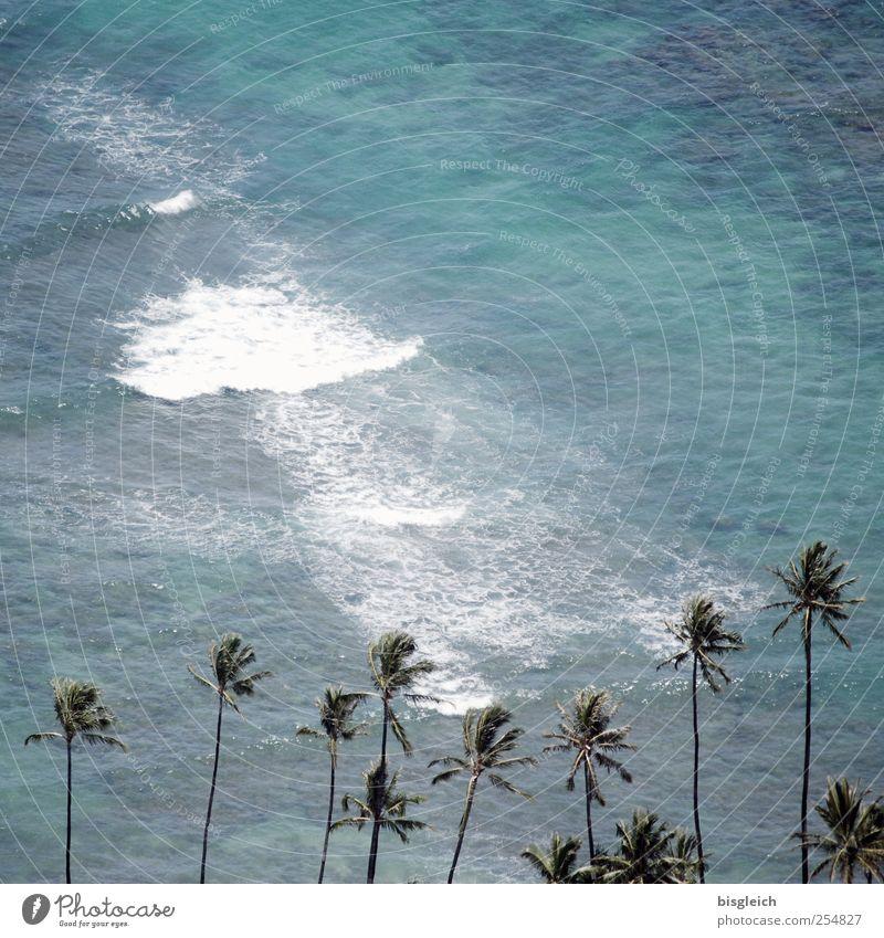Hawaii II Exotic Summer Summer vacation Beach Ocean Waves Beautiful weather Palm tree Coast Pacific Ocean Pacific beach Island Honolulu USA Americas Blue Green