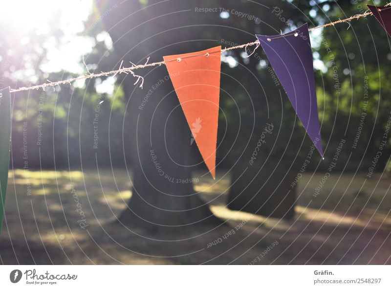 summer atmosphere Lifestyle Leisure and hobbies Summer Sun Party Landscape Sunlight Park Meadow Flag Hang Illuminate Happiness Kitsch Brown Green Violet Orange