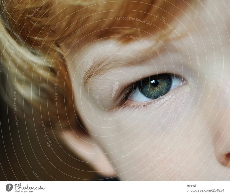 Human being Child Face Eyes Boy (child) Hair and hairstyles Head Blonde Infancy Skin Toddler Bangs Section of image Red-haired Partially visible Eyebrow