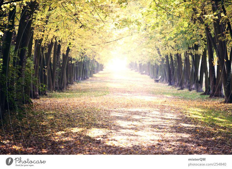 Nature Green Tree Plant Leaf Calm Autumn Environment Landscape Lanes & trails Park Esthetic Hope To go for a walk Autumn leaves Avenue
