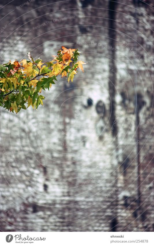 hello Autumn Tree Leaf Branch Twigs and branches Building Wall (barrier) Wall (building) Yellow Green Hope Life Colour photo Exterior shot Structures and shapes