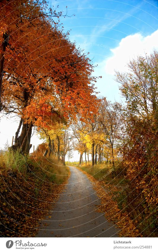Sky Nature Blue Tree Red Clouds Yellow Autumn Environment Landscape Emotions Grass Lanes & trails Moody Brown Gold