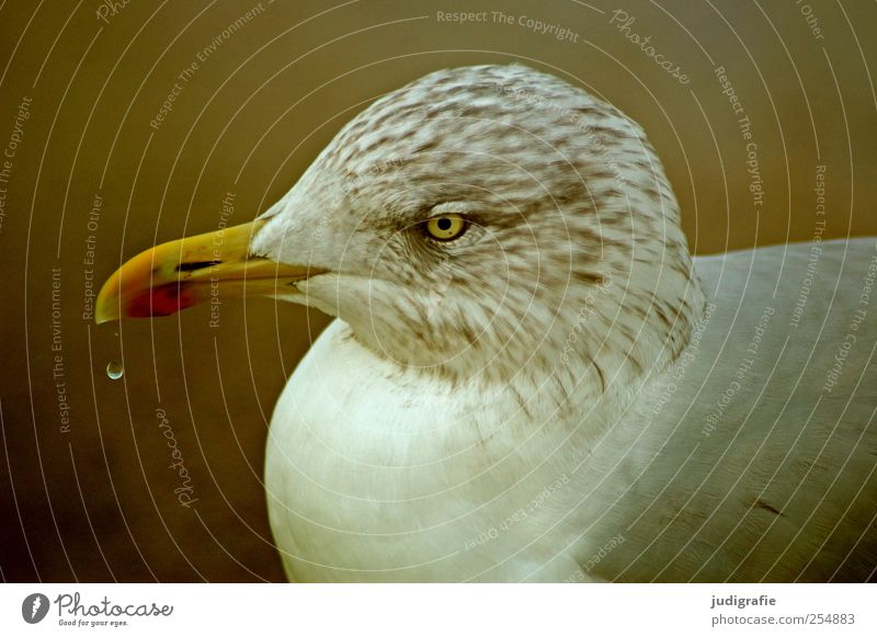seagull Nature Animal Wild animal Bird Seagull 1 Life Environment Drops of water Feather Beak Colour photo Exterior shot Light Animal portrait Profile